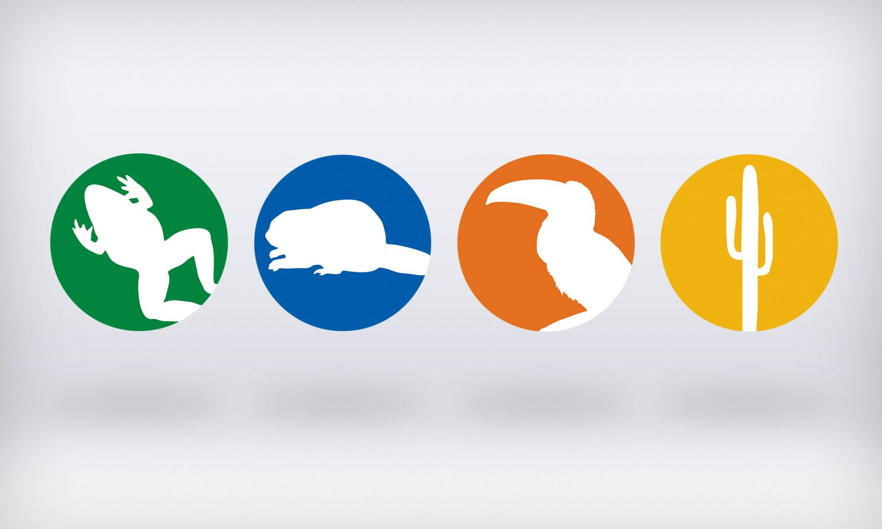 Icons for four of the major software titles we produced: The Digital Frog and Digital Field Trips to The Wetands, The Rainforest and The Desert (which I also project managed).