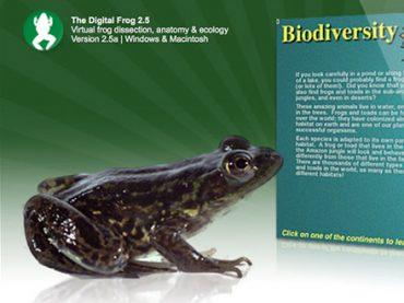 Digital Frog International web site